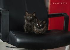 funny kittie cats