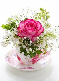 Rose Reveries