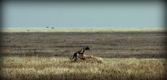 """Sabías que...el parque nacional del Serengeti debe su nombre a la palabra maasai siringet (""""llanura sin fin"""") debido a su terreno?"""