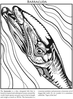 Monster Sea Creatures: A Close-Up Coloring Book Dover