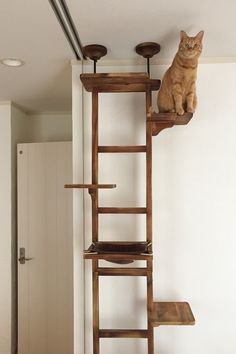 This cat climbing tree looks like a ladder and offers a great place for your cat to hang out.