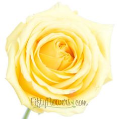 FiftyFlowers.com - Gold Strike Yellow Rose