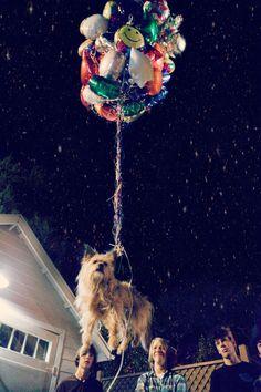 algún día haré esto con mi perro, ojala mi vieja no lo vea :D