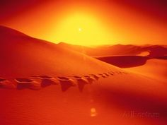 Footprints in desert Photographie par Frank Krahmer sur AllPosters. Dune, Frames For Canvas Paintings, Sunset Landscape, Affordable Wall Art, Tropical Art, Sale Poster, Abstract Photos, Cool Posters, Beautiful World