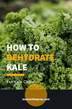How to Dehydrate Kale for Making Kale Chips or Kale Powder - fabulous method to preserve kale well past the season! It's healthy and delicious! Healthy Bedtime Snacks, Healthy Protein Snacks, Healthy Shakes, Healthy Breakfasts, Eating Healthy, Kale Powder, Making Kale Chips, 100 Calorie Snacks, Clean Eating Desserts