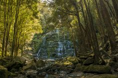 Serenity with trees and a waterfall in Tasmania, Australia