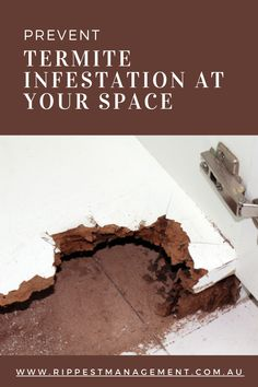 The professional termite control experts in North Shore, on being informed, take effective steps to discover the termite pest infestation and save you from undertaking huge costs due to the termites. Termite Pest Control, North Shore, Canning, Home Canning, Conservation