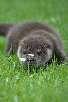 Top 11 Ridiculously Cute Pictures of Otters - Tiere Pin Cute Creatures, Beautiful Creatures, Animals Beautiful, Nature Animals, Animals And Pets, Mercy For Animals, Cute Baby Animals, Funny Animals, Animal Pictures