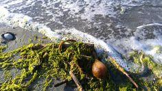 Kelp Beach, Painting, Art, Art Background, Seaside, Painting Art, Kunst, Gcse Art, Paintings