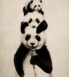 Naturally Young ': #Inspirando - Pandas