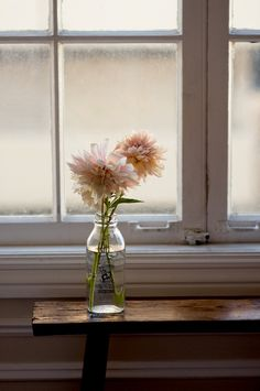 Soft pink dahlias by the window.