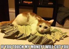 If you touch my money I will cut you #catoftheday