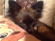 Hunde Foto: Gina und Elli - Elli von Angermünde Hier Dein Bild hochladen: http://ichliebehunde.com/hund-des-tages  #hund #hunde #hundebild #hundebilder #dog #dogs #dogfun  #dogpic #dogpictures
