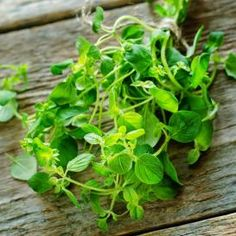 Shop for Oregano Seeds by the Packet or Pound.Com offers Hundreds of Seed Varieties, Including the Finest and Freshest Oregano Seeds Anywhere. Growing Mint, Growing Herbs, Herb Seeds, Garden Seeds, Aromatic Herbs, Medicinal Herbs, Seeds Online, Room With Plants, Fresh Mint Leaves