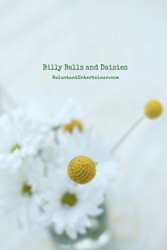 Yellow Billy Balls and Daisies | reluctantentertainer.com