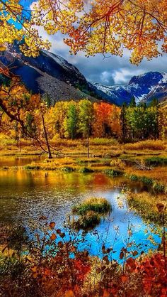 Beautiful fall colors in the mountains Fall Pictures, Nature Pictures, Pretty Pictures, Funny Pictures, Beautiful World, Beautiful Places, Trees Beautiful, Beautiful Nature Wallpaper, Landscape Photography