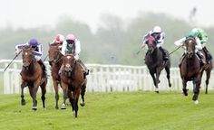 Frankel, undefeated in ten starts, destroys the field in his four year old debut at Newbury in the G1 Lockinge. Photo by Edward Whitaker, racingpost.com
