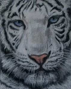 Wildlife Art Close Up White Tiger Pastel by Della Burgus, painting by artist Art Helping Animals