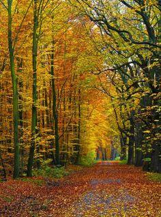 Autumn Path Fall Leaf Photo Backdrop - 543