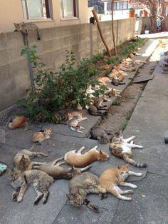 The Cat Filled Island Of Aoshima, Japan
