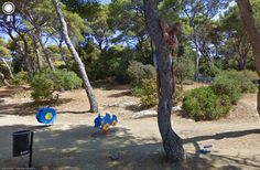 Climbing trees to take Google Street Views picture