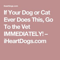 If Your Dog or Cat Ever Does This, Go To the Vet IMMEDIATELY! – iHeartDogs.com