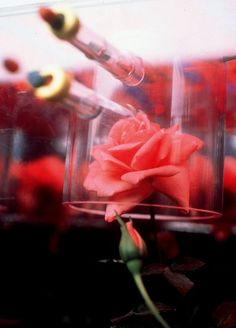 Astronauts grew a rose in space just to see if it would smell different than a rose on Earth. And it did! Volatile compounds that make a flower smell a certain way act differently in microgravity.