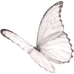 White butterfly as tattoo