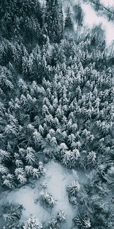 Pine Tree Wallpaper Iphone Nature 27 Ideas For 2019 nature wallpaper tree 782148660268217999 Winter Wallpaper, Christmas Wallpaper, Nature Wallpaper, Of Wallpaper, Tree Photography, Iphone Photography, Aerial Photography, Tree Tattoo Back, Tree Wallpaper Iphone