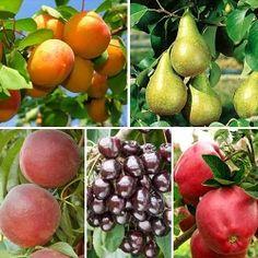 Super ofertă! Pomi fructiferi Lovely mix, set de 5 soiuri | Most often bought GradinaMax Plant