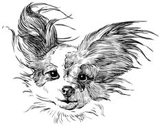 chihuahua - Buy this stock vector and explore similar vectors at Adobe Stock Papillon Dog, Silhouette Clip Art, Machine Embroidery Patterns, Embroidery Ideas, Dog Pattern, The Design Files, Dog Design, Graphic Art, Butterfly
