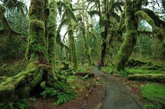 Hoh Rainforest, Olympic National Park. Didn't even know the US had rain forests. I want to go NOW.
