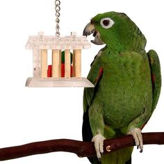 House of Treats Reusable Foraging Toy for Parrots