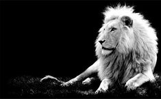 black and white photos | Beautiful Black and White Photography of Animals