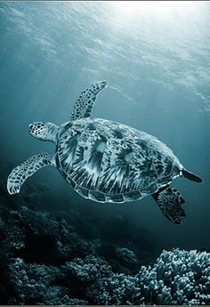 ♂ Amazing nature wild life photography animals The Sea animals underwater world