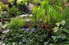 Bog Garden Bog Garden, Garden Plants, Home And Garden, Cottage Gardens, Garden Inspiration, Perennials, Pond, Old Things, Gardening