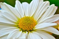 My favorite flower is a Daisy.  Such a simple flower but doesn't know it.
