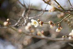 Frühling, Frühlingsblumen, Natur