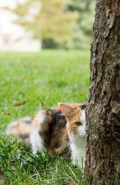 cat  {pamelagreer}