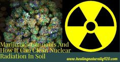 Marijuana Pants cleans up nuclear radiation and toxic soil