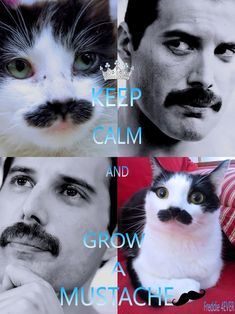 The best mustache in the world!!! I Am A Queen, Save The Queen, Daily Queen, Mr Fahrenheit, Growing A Mustache, Cool Mustaches, Queen Meme, Funny Animals, Funny Cats