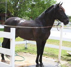 Happi Farm Horseback Riding in Southwest Ranches, FL