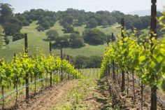 Spring in Napa | winesisterhood.com