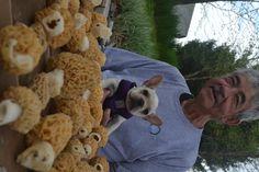 French bulldog mushroom hunter