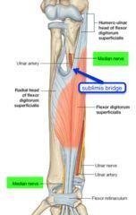 Median nerve under sublimis bridge (entrence 2, under entrence 1 - pronator teres muscle)