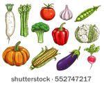 Hand drawn doodle vegetables icons set Vector illustration seasonal vegetable symbols collection Cartoon different kinds of vegetables Various types of vegetables on white background Sketchy style - 食品及饮料,物体 - 站酷海洛创意正版图片,视频,音乐素材交易平台 - Shutterstock中国独家合作伙伴 - 站酷旗下品牌