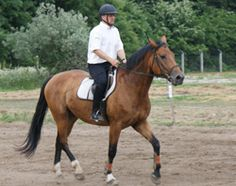 Felnőtt lovastábor Budapest, Akadémia Lovasiskola Horse Riding, Budapest, Bike, Horses, Holiday, Animals, Bicycle, Vacations, Animales