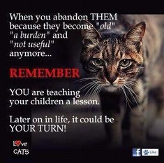 "When you abandon THEM becayse they become ""old"" ""a burden"" and ""not useful"" anymore. REMEMBER YOU are teaching your children a lesson. Later on in life, it could be YOUR TURN! Animals And Pets, Cute Animals, Strange Animals, Albert Schweitzer, Stop Animal Cruelty, Your Turn, Animal Welfare, Animal Quotes, Animal Facts"