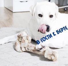 https://vk.com/club134364523 Все о породе!!!