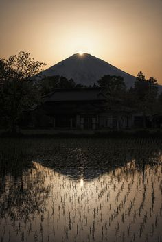 Diamond Fuji Reflected in a RIce Field